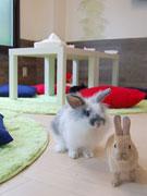 神宮前にカフェスタイルのウサギ専門店「ラフ」-ウサギスタッフも