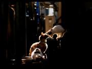 渋谷ルデコで写真展「猫色に染まる6日間」-ブログ「東京猫物語」主催