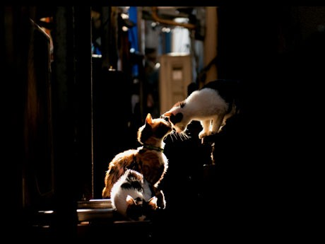 4フロアを使い、猫をモチーフにした写真約250点を紹介する