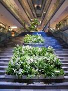 南国に生息する植物などをディスプレーしトロピカルな空間を演出している吹き抜け大階段