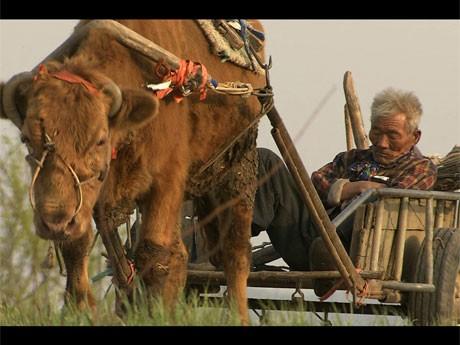 79歳の農民と30年共に働いてきた牛の「愛」と自然を描く「牛の鈴音」より