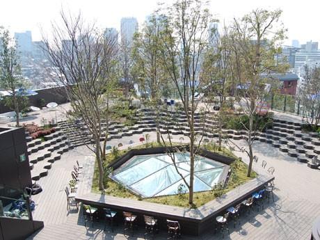 すり鉢状の「おもはらの森」の随所には8種ほどの樹木を植えている