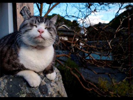会場では岩合さんが40年以上かけて撮影してきた猫の写真約240枚を展示する©MITSUAKI IWAGO