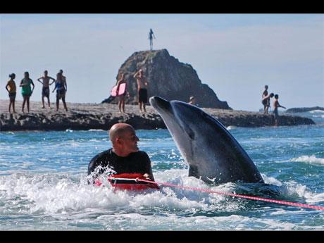 イルカの「モコ」と人間の物語「海の魂」より