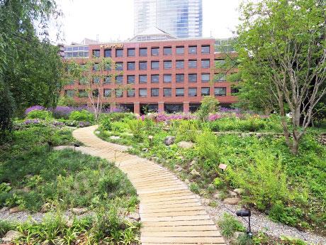 100種類以上の植物を植えた「サッポロ広場」。奥の建物がサッポログループ本社