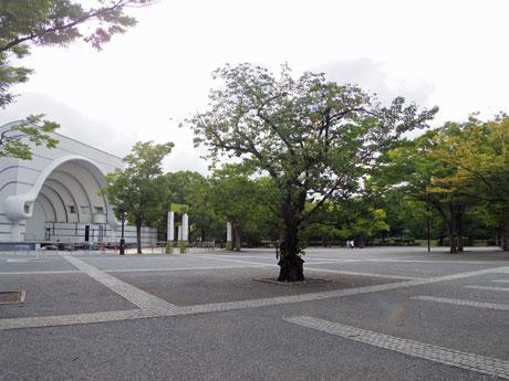 会場となる代々木公園イベント広場