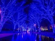 渋谷のイルミ「青の洞窟」、大みそかに終夜点灯 カウントダウンや音楽演出も