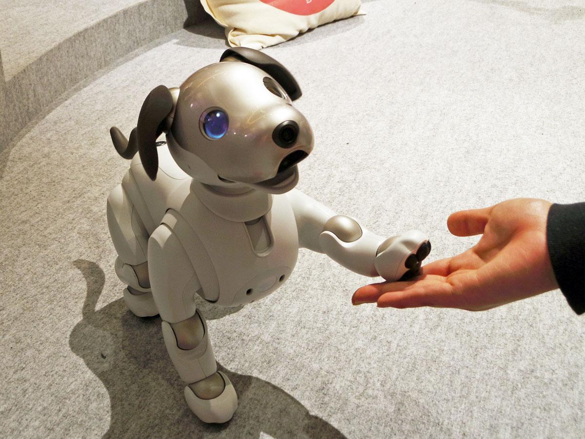 渋谷モディで「aibo」と触れ合い ソニーが12年ぶり新型発売