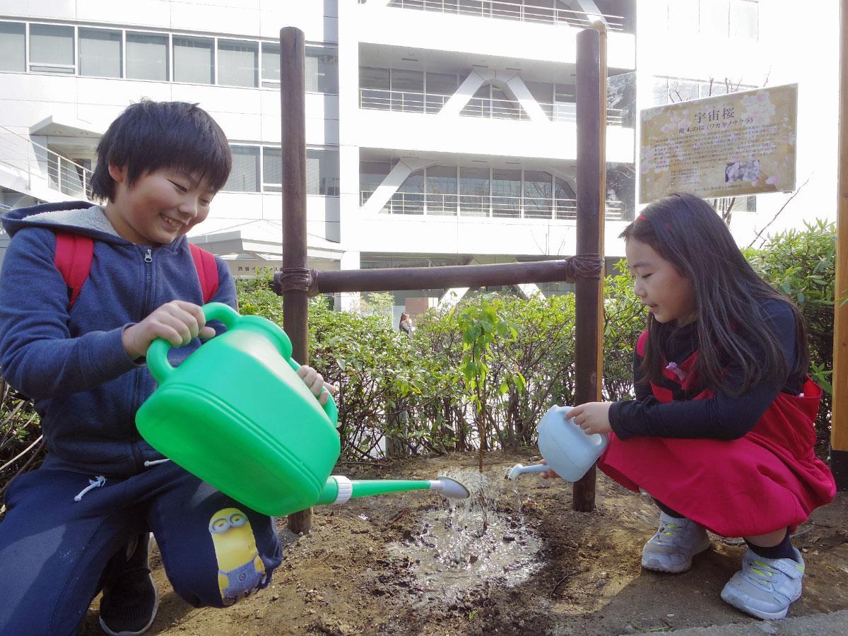 植樹した高さ約50センチの「宇宙稚木の桜」の苗木に水をまいた