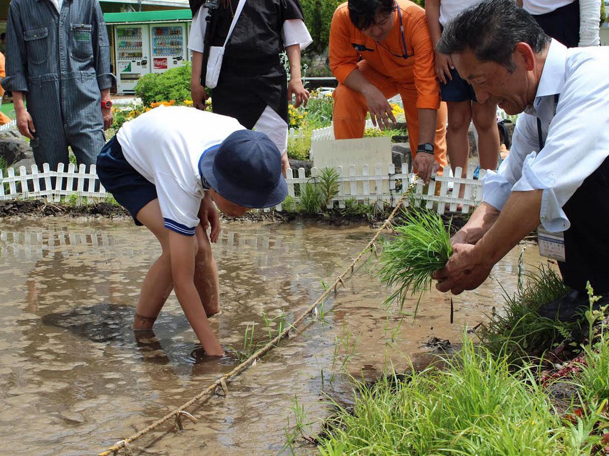神南小学生が田植えをした