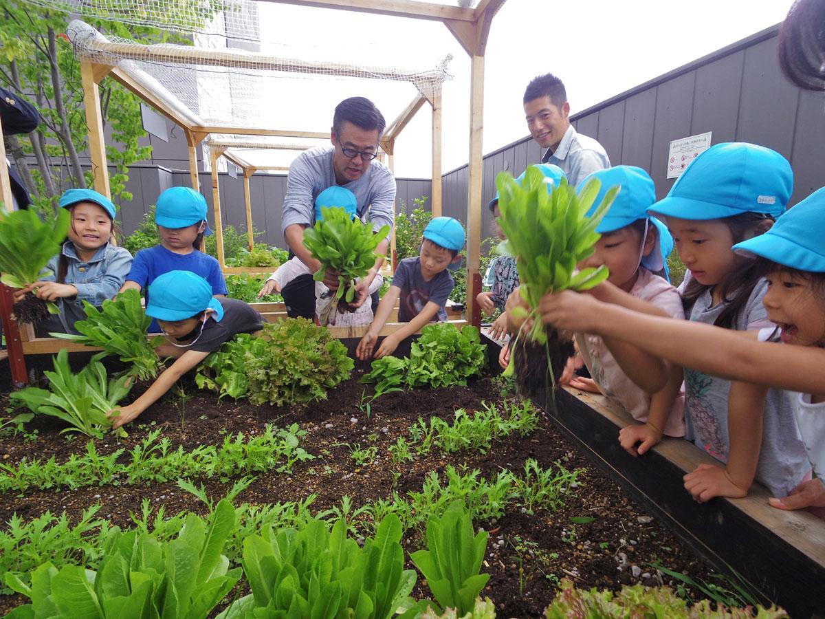 育った野菜を収穫する園児たち