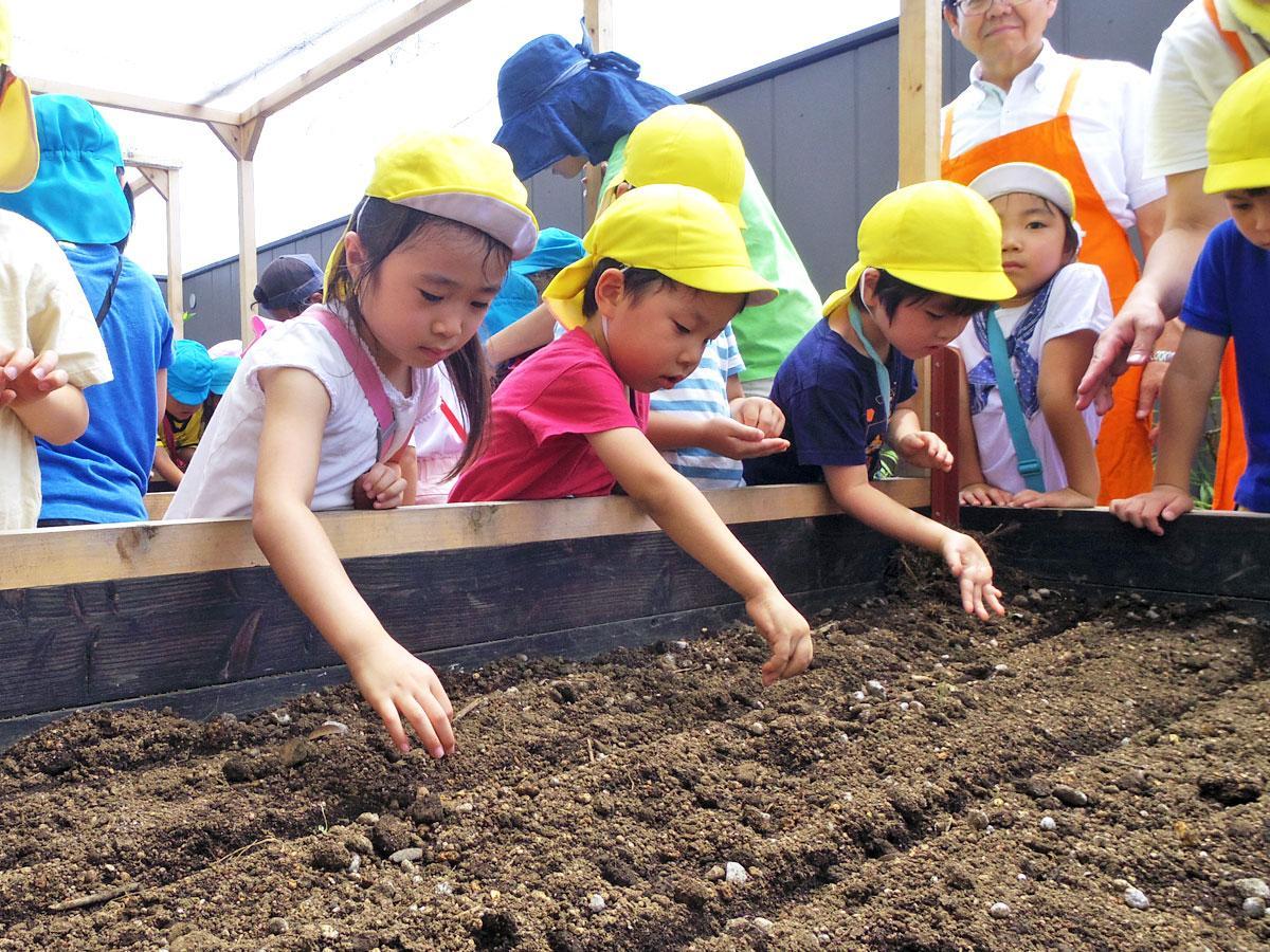 「朱衣」などニンジンの種をまく園児たち