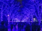 イルミネーション「青の洞窟」、代々木公園ケヤキ並木などで点灯 音と連動も