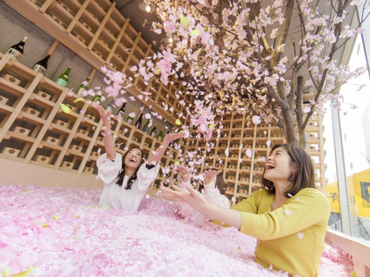 花びら120万枚を使った「桜プール」が目玉に