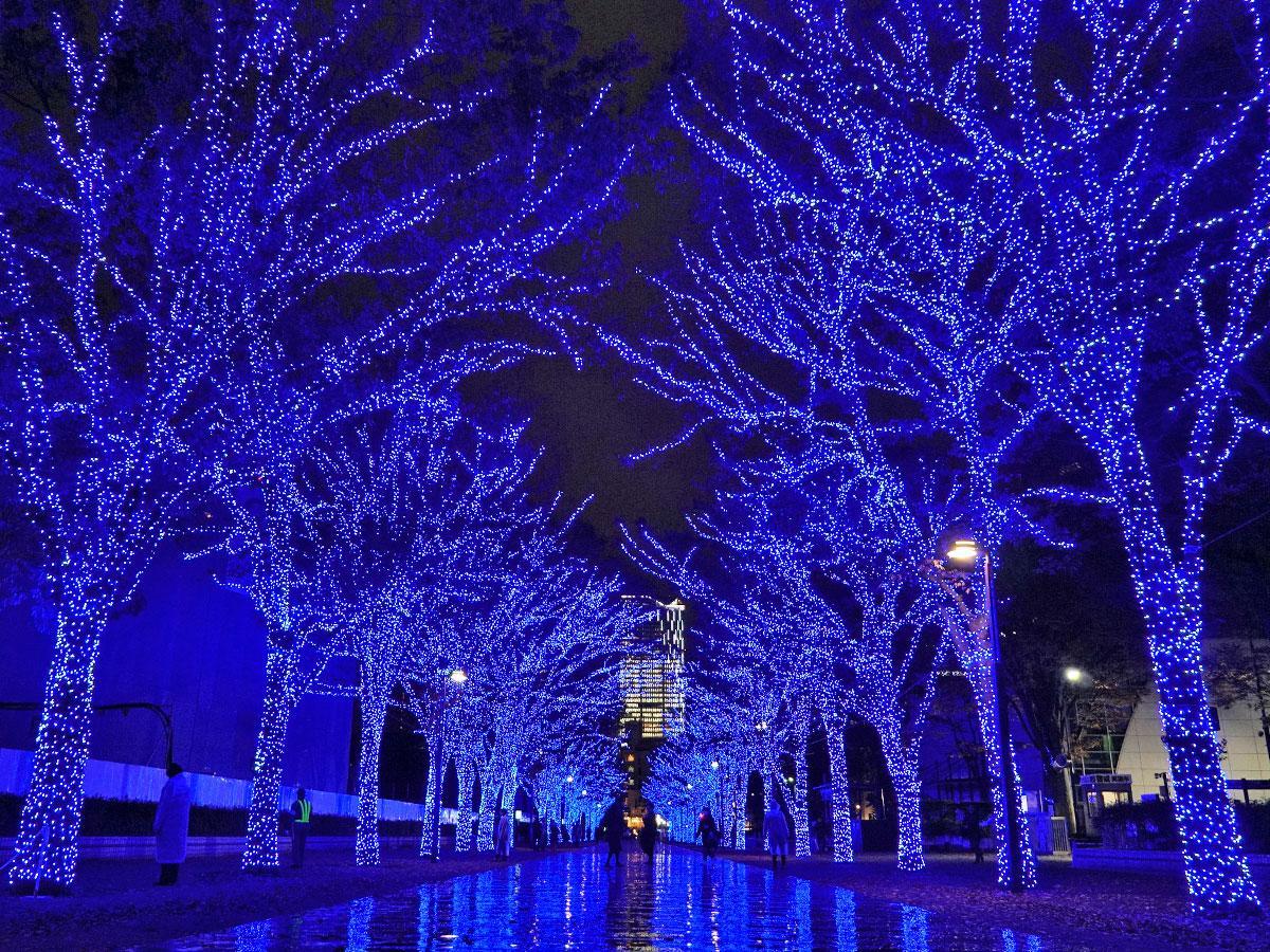 青色のイルミネーションで彩る代々木公園ケヤキ並木