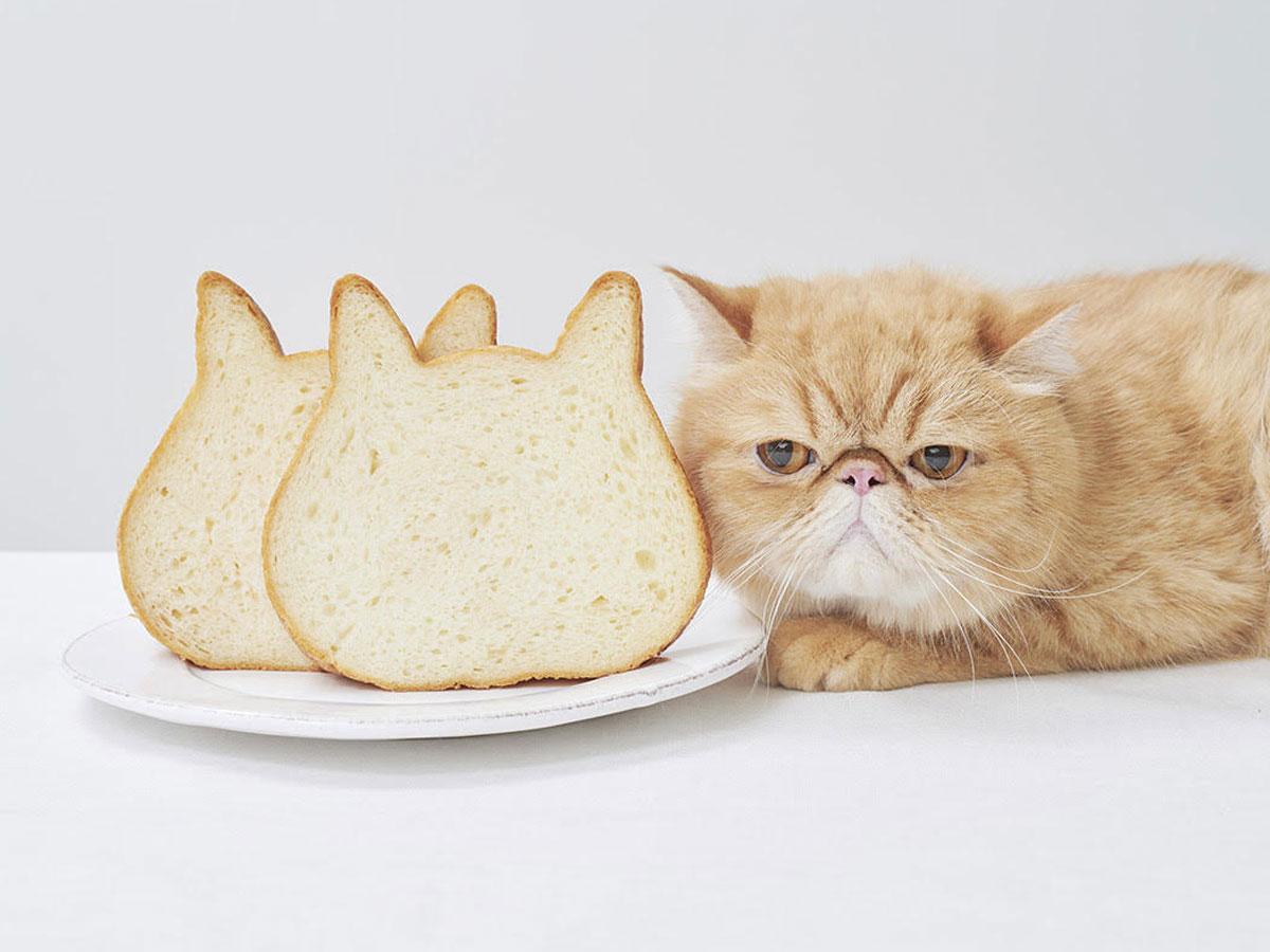猫の顔をかたどった食パンを販売する
