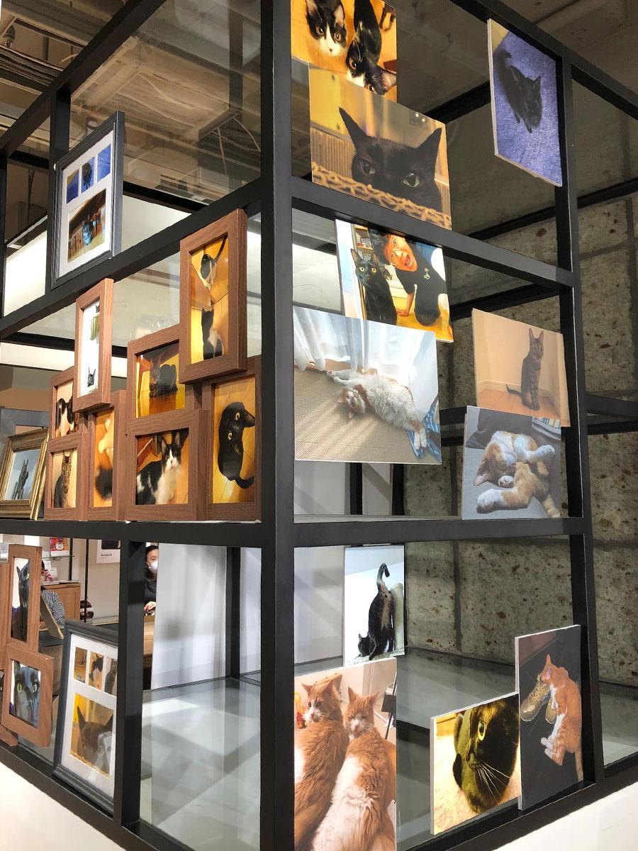 場内では参加芸人が撮り下ろした飼い猫の写真などを展示する