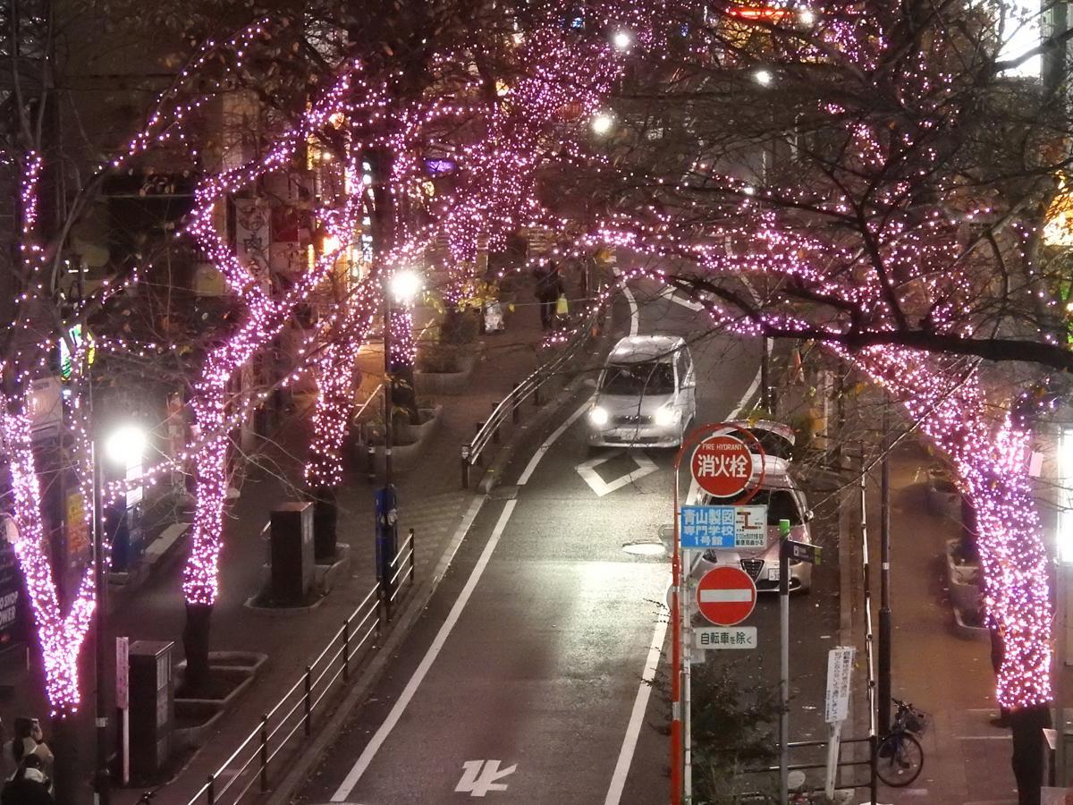 桜並木をピンクのイルミネーションで彩る桜丘町のさくら坂