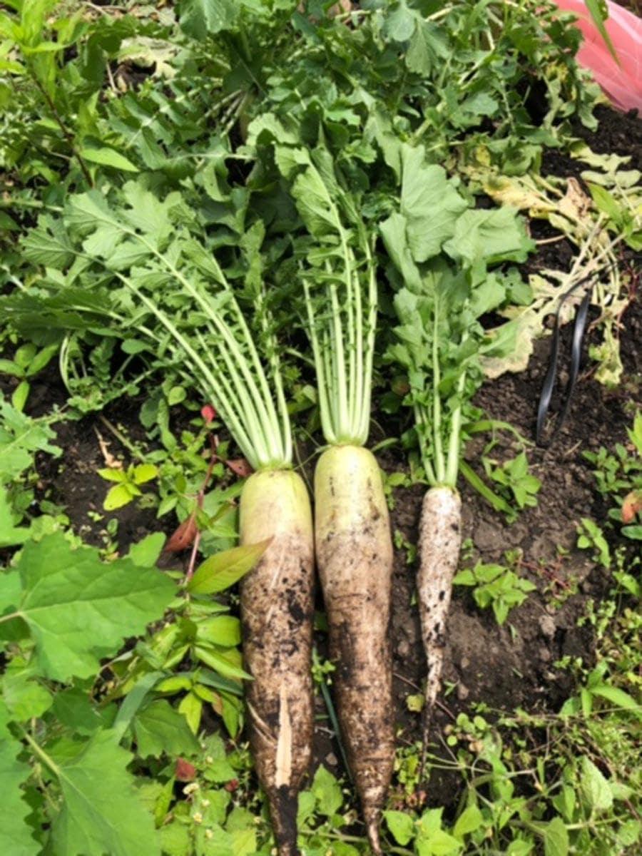 マルシェでは無農薬・有機・自然栽培中心の野菜などを販売する