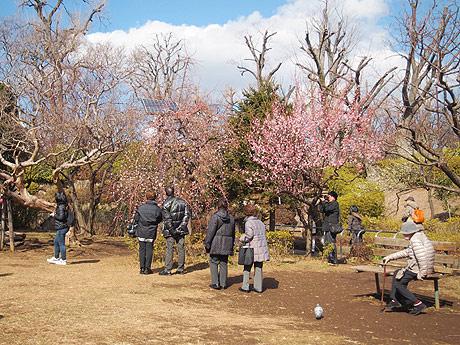 開花した梅に見入る来場者たち