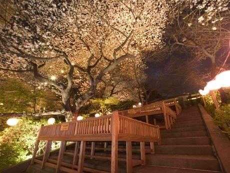 グランドプリンスホテル高輪の「ステーキハウス 桂」では桜さじき席を用意し、花見をしながら料理を楽しめる。