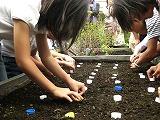 目黒アトレ屋上で「品川かぶ」種まき-植樹するアイドルの卵も