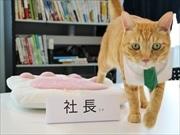 西五反田に「猫と暮らす物件」専門の不動産店-猫の「サノスケ社長」が初出勤