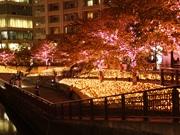 目黒川沿いに「冬の桜」イルミネーション 花びら型の電球も