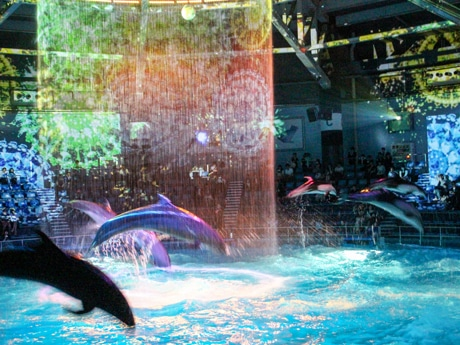 イルカのパフォーマンス「星花火(ほしはなび)」