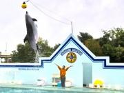 しながわ水族館がハロウィーン仕様に カボチャの玩具にイルカが大ジャンプ