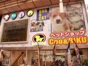 武蔵小山に「ペットショップCoo&RIKU」と「猫喫茶 空陸屋」 2業態同時出店