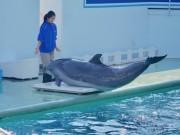 しながわ水族館が開館作業を初公開 イルカの体重・体温チェックの模様も