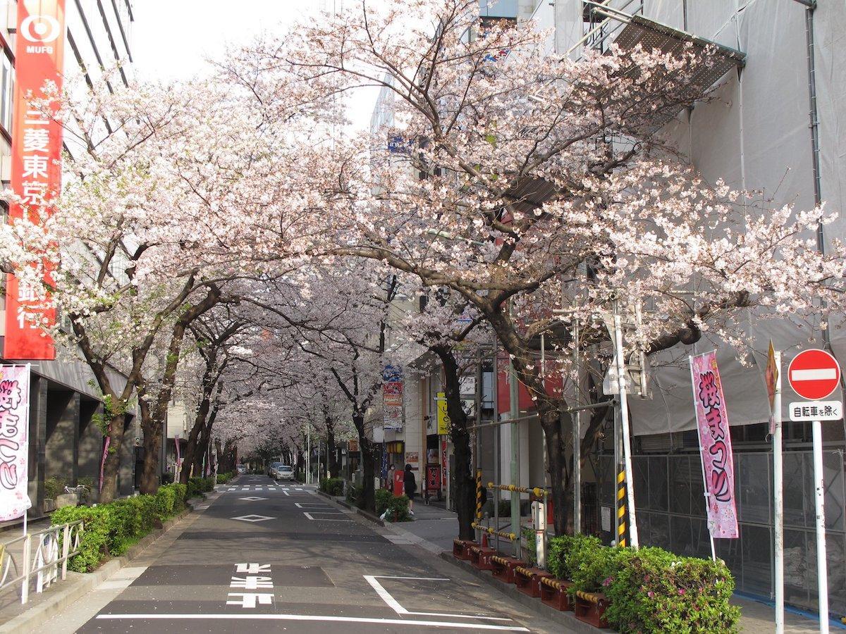昨年、桜が開花した様子