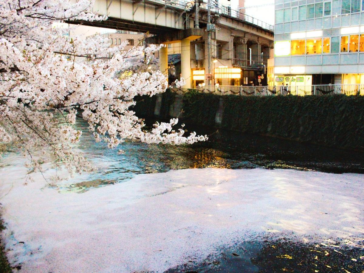 目黒川に出現した花いかだ(撮影場所=五反田駅近くの大崎橋)