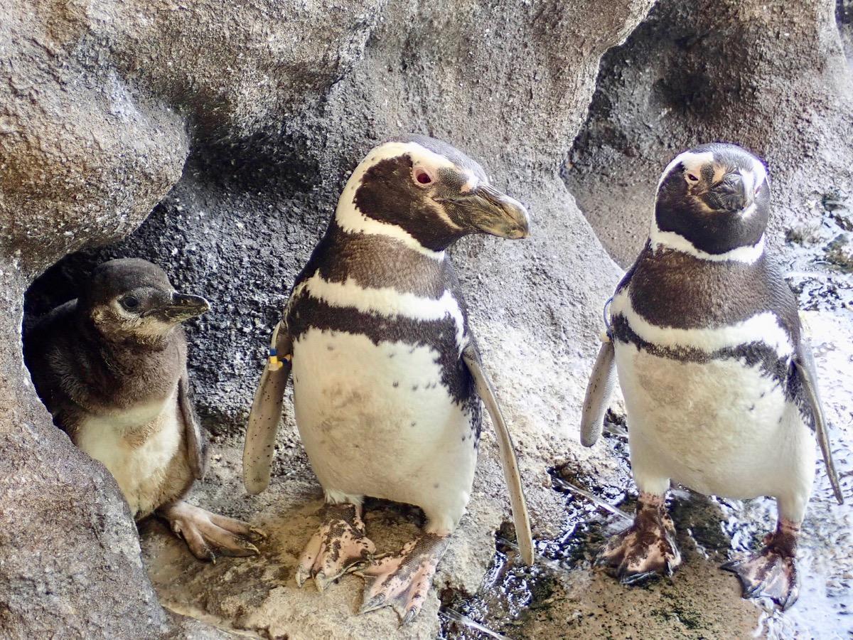 今回生まれた赤ちゃん(左)、オス「黄青栗」(中央)、メス「青白」