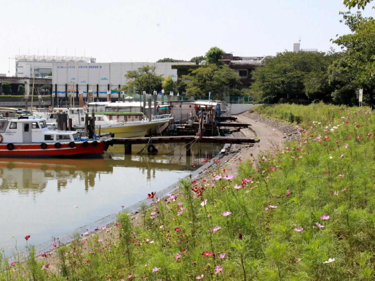 勝島運河沿いの「しながわ花海道」