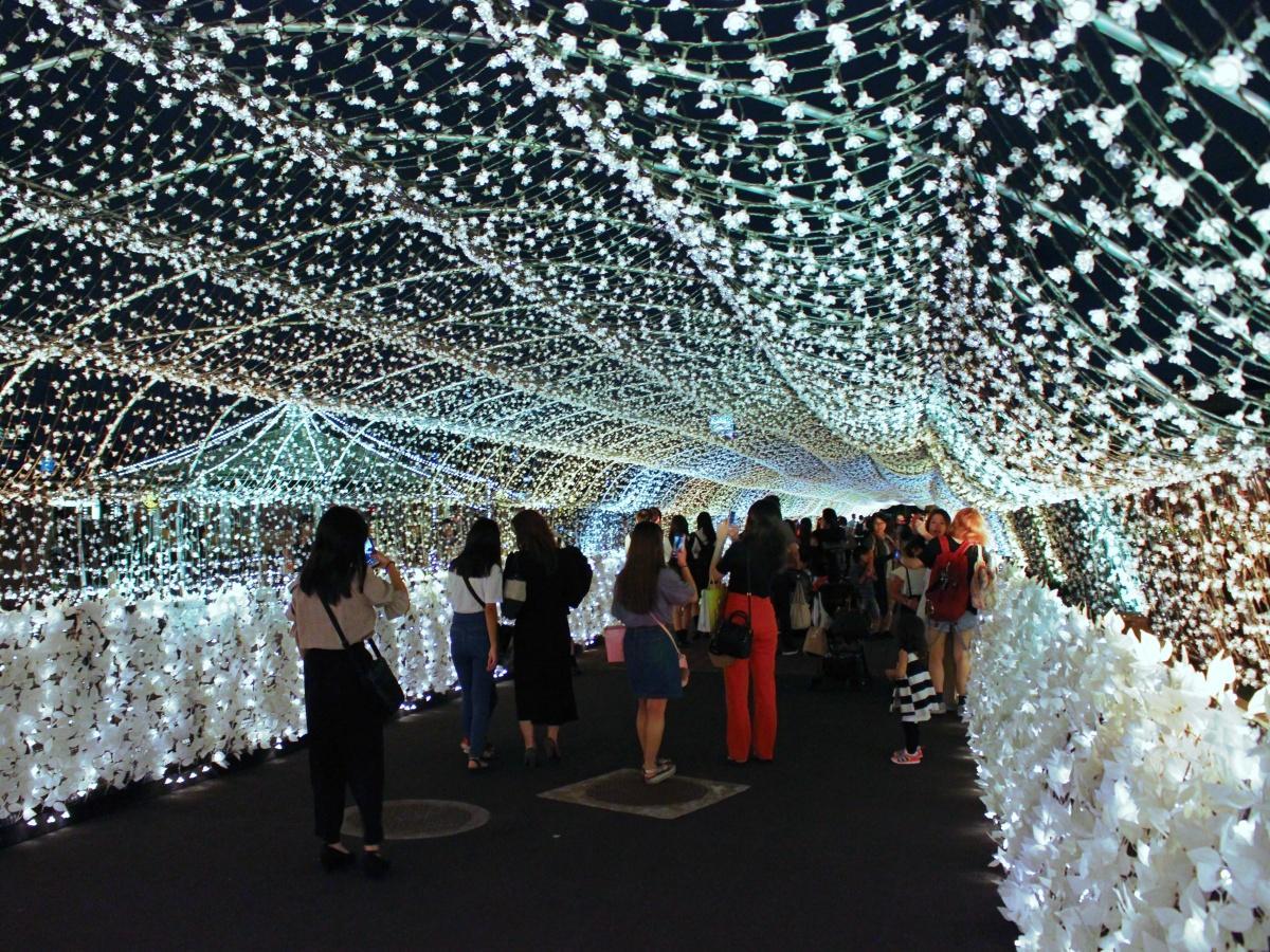 新たに設けられた「江戸桜トンネル」