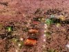 高輪のホテル日本庭園で「高輪 桜まつり」開催迫る お花見ができる桟敷席も