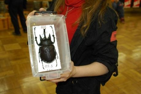 高価な生体も陳列される「BLACK OUT! 2008」。名称の由来は主催者が「色虫」が好きだから(黒い虫は「OUT」という意)