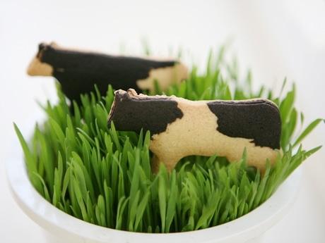 昨年末から売れ行きが伸びている「YuuYoo」の牛サブレ。札幌から毎週直送している。