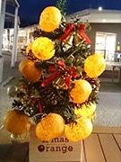 新橋・せとうち旬彩館で「クリスマスオレンジ」 ミカン使ったツリーも