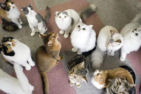 「キャット・マジック新宿3丁目店」の猫スタッフたち