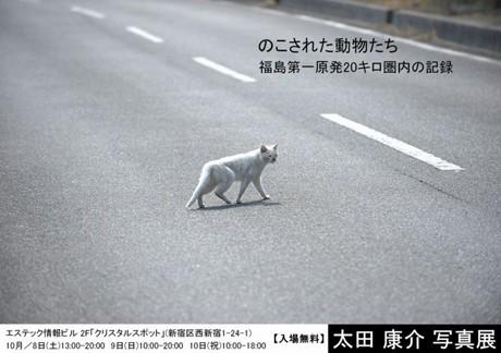 太田康介写真展「のこされた動物たち」福島第一原発20キロ圏内の記録