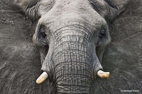 ミヒャエル・ポリツァさんの作品「ゾウ/クルーガー国立公園/南アフリカ」