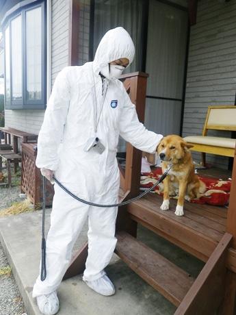 飼い主さんからの依頼を受け、救護された犬「ジロ」(2011年5月撮影)。