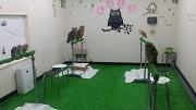 新宿に初のフクロウカフェ「もふもふ」 7匹のフクロウがお出迎え