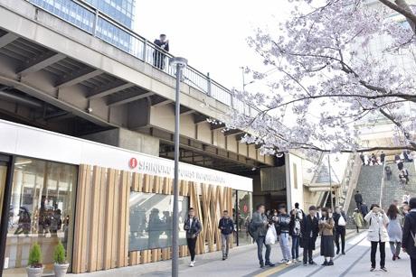 新宿観光案内所の外観。植樹されたタカトオヒガンザクラが目印