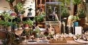 新宿パークタワーで「ボタニカル・スタイル展」 植物をインテリアに取り入れる