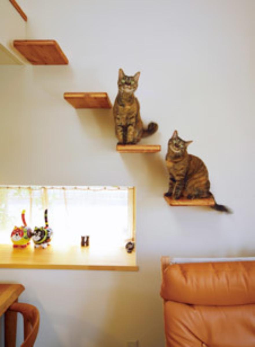 3月4日のセミナーは「人も猫も快適生活!4匹のネコと気持ちよく暮らす家」がテーマ。室内飼育の猫に欠かせない工夫を解説する