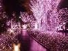 新宿テラスシティでイルミ 桜を想起させるベビーピンクに点灯